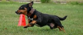 Hundesport Pratzschwitz Mitmachen